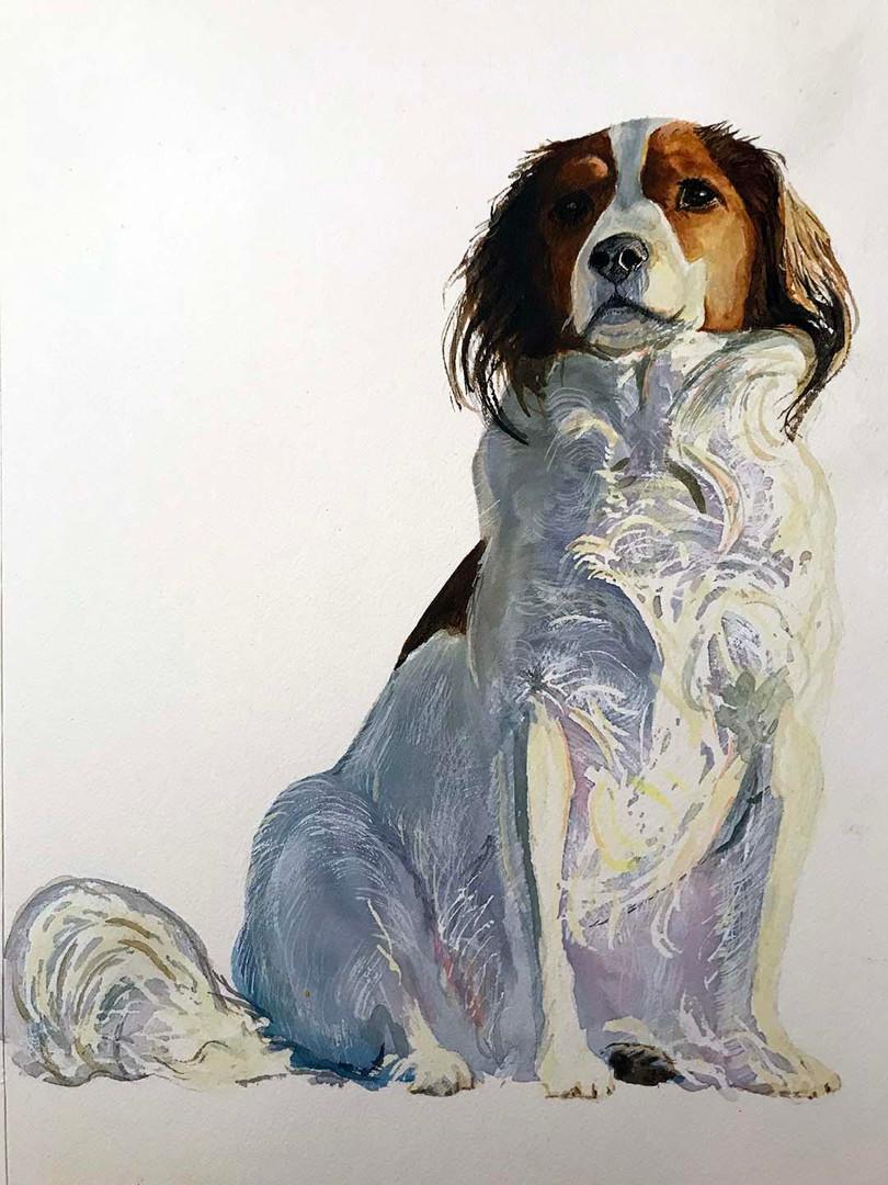 Maggie Daigle - Dog.jpg