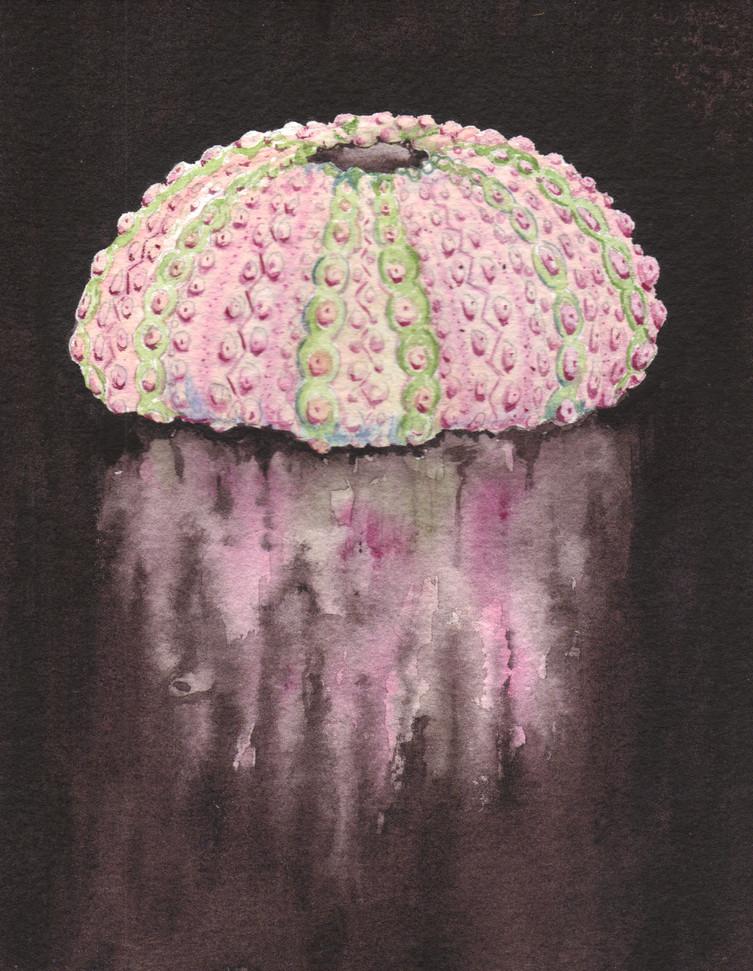 Andrea Dacko - Reflected Urchin.jpg