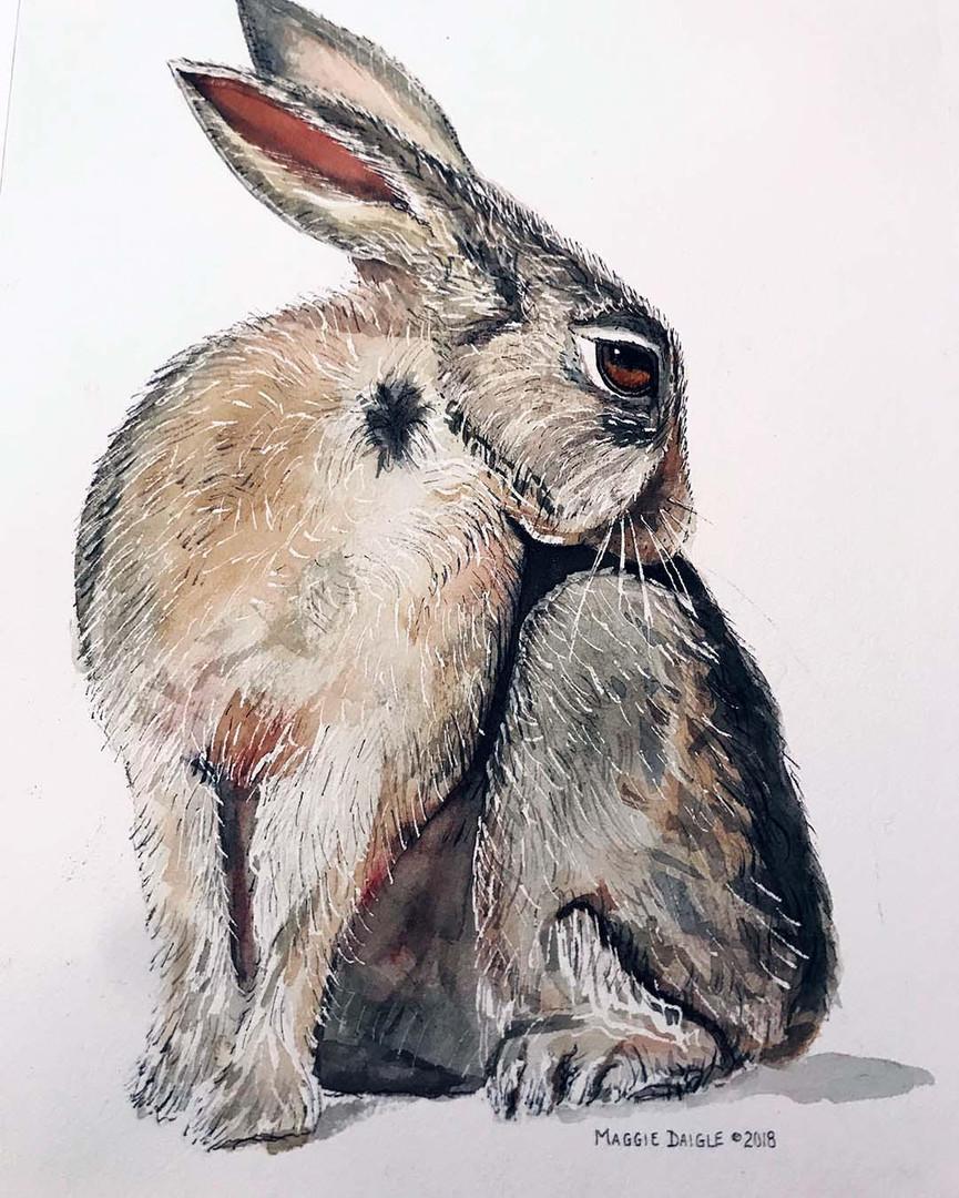 Maggie Daigle - Rabbit.jpg