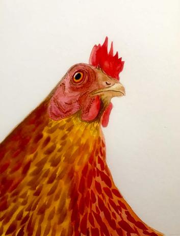 Maggie Daigle - Chicken.jpg