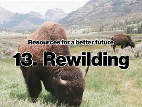 Rewilding by Josh Sterlin