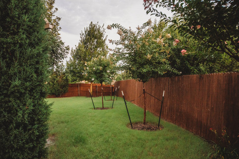 Tree Care & Pruning by Red Valley Landscape & Construction in Norman, Ok