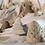 Thumbnail: Gift Box Winter Wonderland - set of 6 Festive Decorations