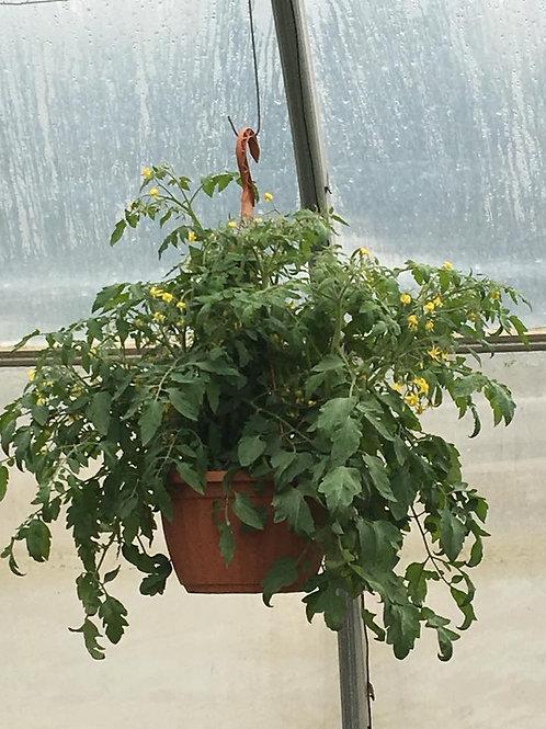 Jardinière de Tomate cerise