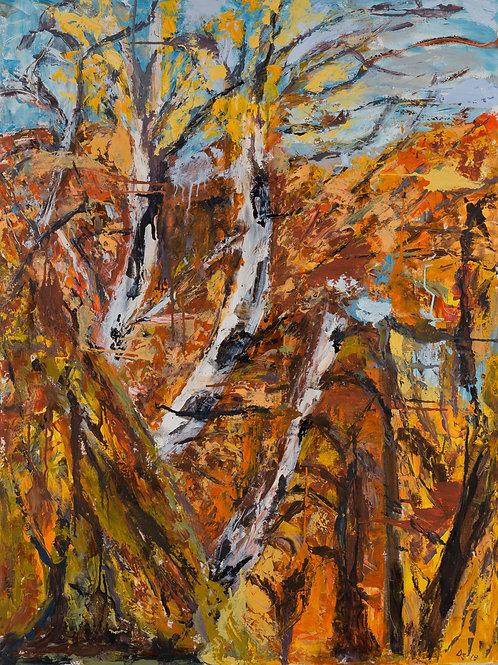 Birch Under Fall Skies