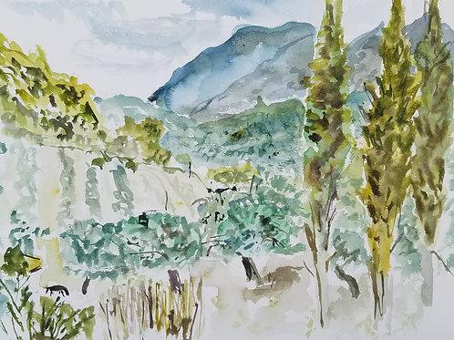 Greek Olive Groves
