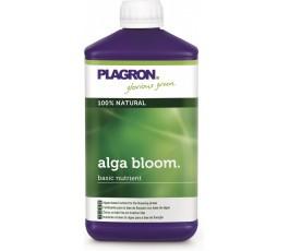 Alga Bloom
