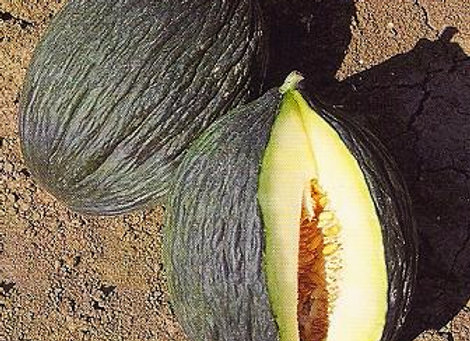 Melone verde napoletano  ( Cucumis Melo)