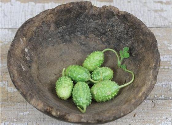 Cetriolo West Indian Burr Gherkin (Cucumis Anguria)