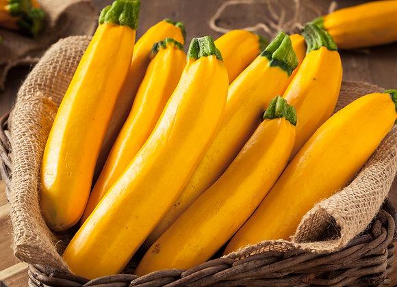 Zucchina Golden (Cucurbita pepo)