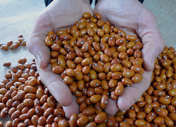 Fagiolo Tabacchino (Phaseolus vulgaris)