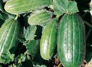 Carosello Scopatizzo (Cucumis melo)