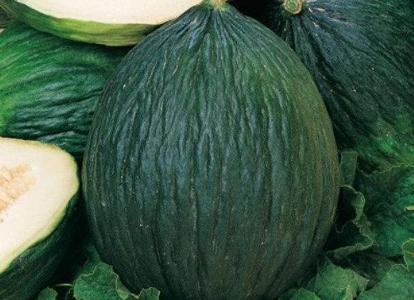 Melone Verde Napoletano tardivo (Cucumis melo)