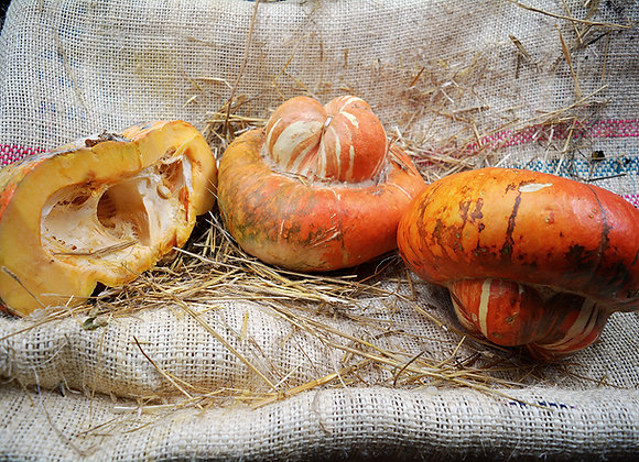 Zucca Turbante Turco (Cucurbita Maxima)