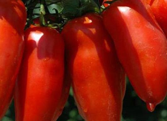 Pomodoro San Marzano (Lycopersicon lycopersicum)