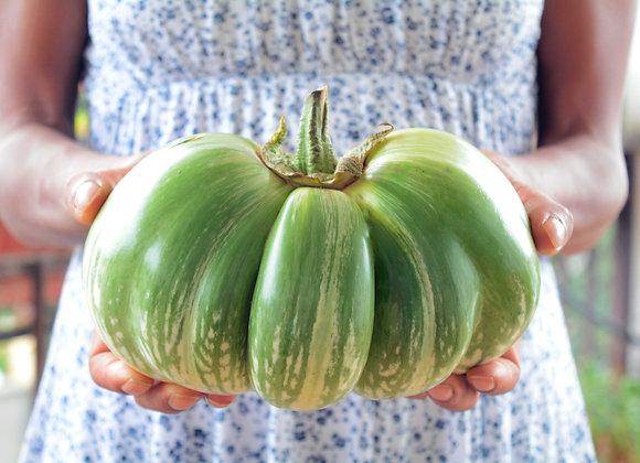 Melanzana verde gigante cambogiana (Solanum melongena)