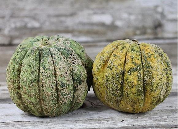 Melone Zatta (Cucumis melo)