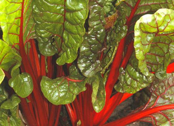 Rubarb Chard - Bietola a coste (Beta vulgaris var. Cicla)