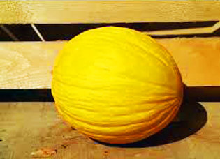 Melone Rugoso di Sibari (Cucumis melo)