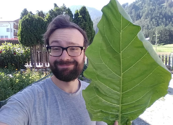 Tabacco dei Savoia (Nicotiana tabacum)