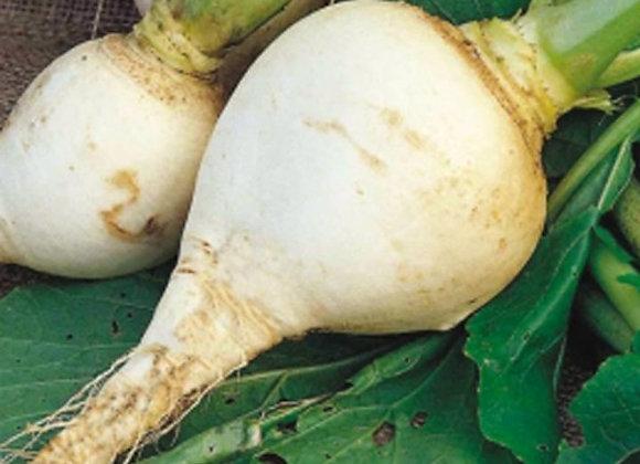 Rapa Catozza Mezza Lunga Napoletana (Brassica rapa)