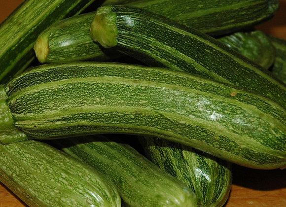 Zucchino San Pasquale (Cucurbita pepo)