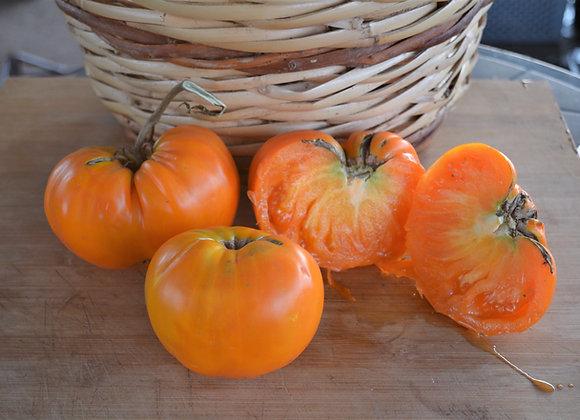 Pomodoro Orange Strawberry (Lycopersicon lycopersicum)