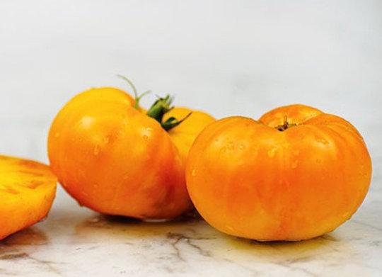 Pomodoro Amana Orange (Lycopersicon lycopersicum)