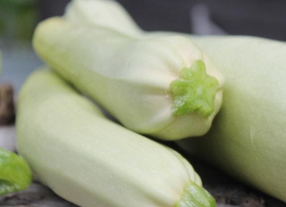 Zucchina Bianca Siciliana (Cucurbita pepo)