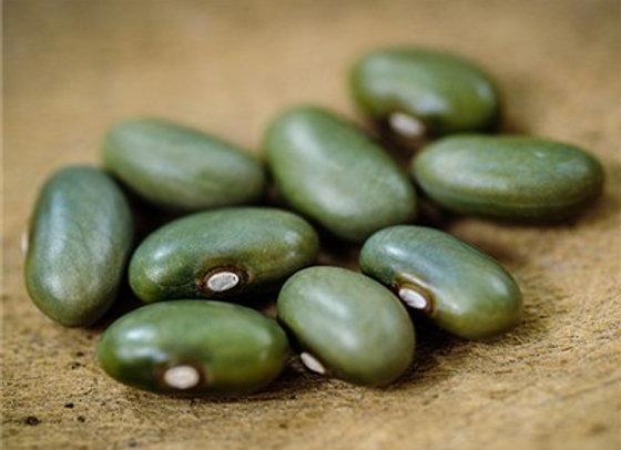 Fagiolo Verde Mbombo (Phaseolus vulgaris)