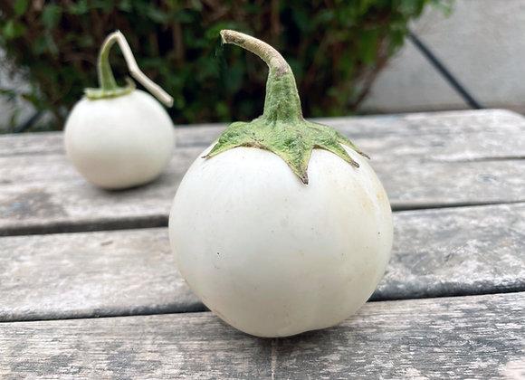 Melanzana Lao White (Solanum melongena)