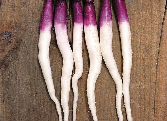 Rapa Hinona Kabu (Brassica rapa)