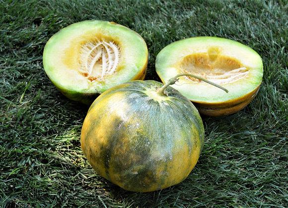 Melone Moscatello (Cucumis melo)
