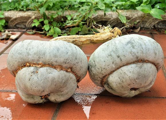 Zucca Cappello del Prete (Cucurbita maxima)