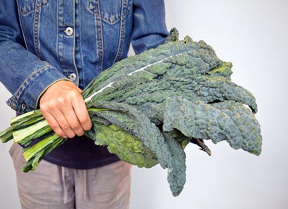 Cavolo Nero Toscano (Brassica oleracea)