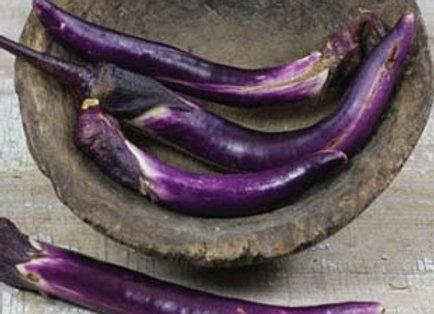Melanzana Pickling Giapponese  (Solanum  melongena)