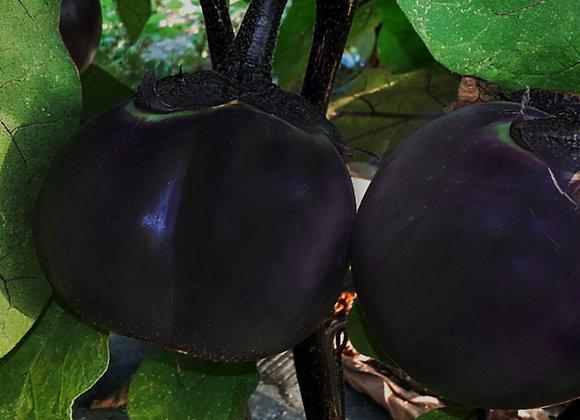 Melanzana Tonda di Valenzia ( Solanum melongena )