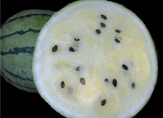 Cocomero Giapponese Suika (Citrullus Ianatus)