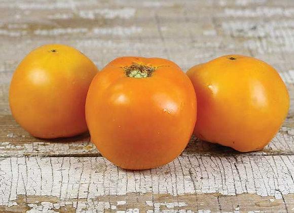 Pomodoro Golden Jubilee (L. Lycopersicum)