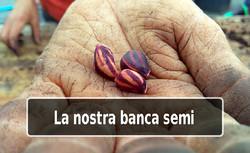 Banca semi