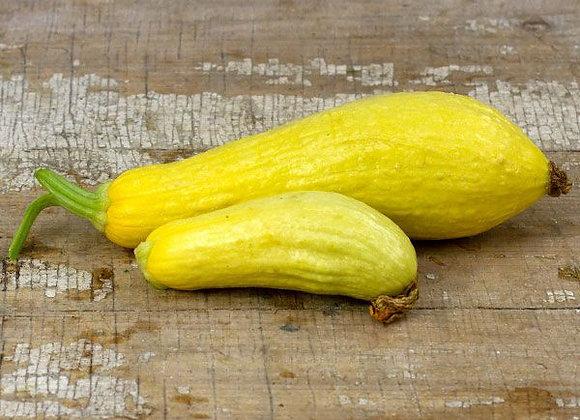 Zucchina Early Prolific Straightneck (Cucurbita pepo)