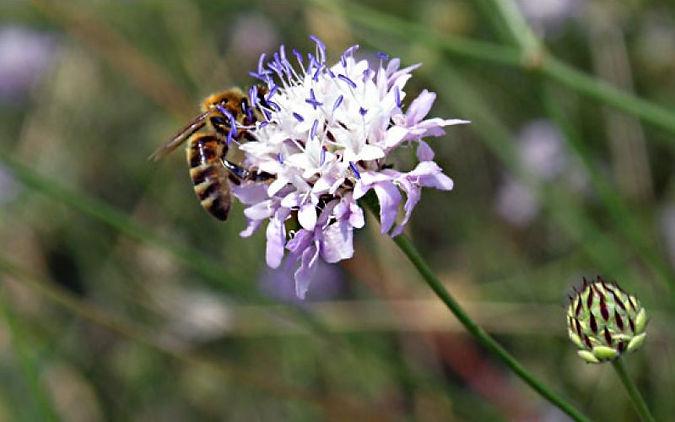 un-fiore-autunnale-salver-le-api-dallest