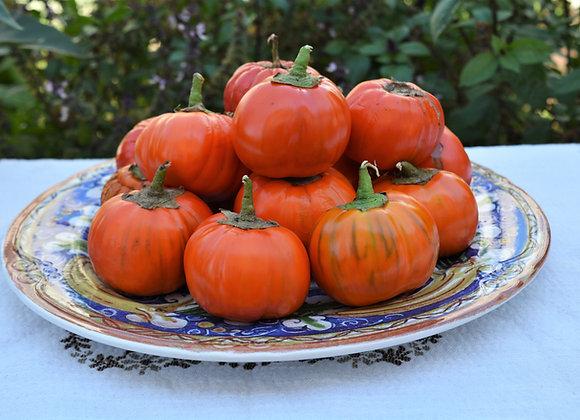 Melanzana Rossa di Rotonda (Solanum aethiopicum)
