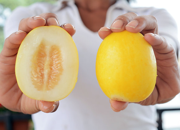 Melon Mango (Cucumis melo)