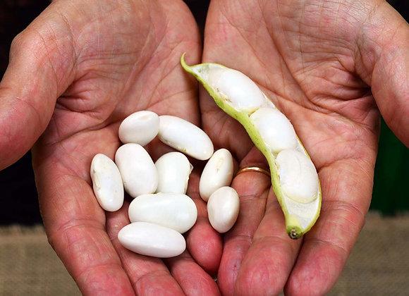 Fagiolo Bianco Tarahumara (Phaseolus coccineus)