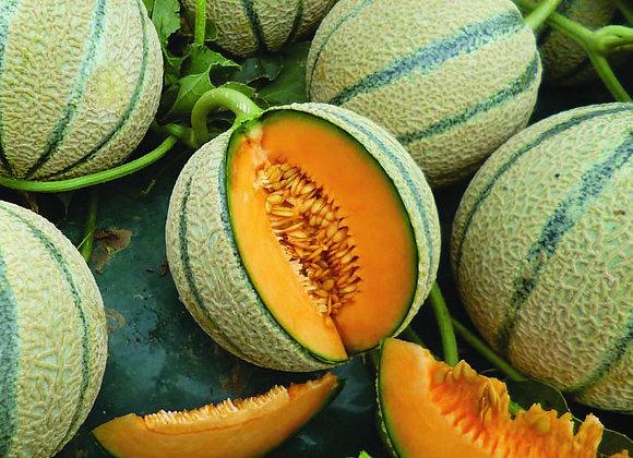 Melone Cantalupo di Charentais (cucumis melo)