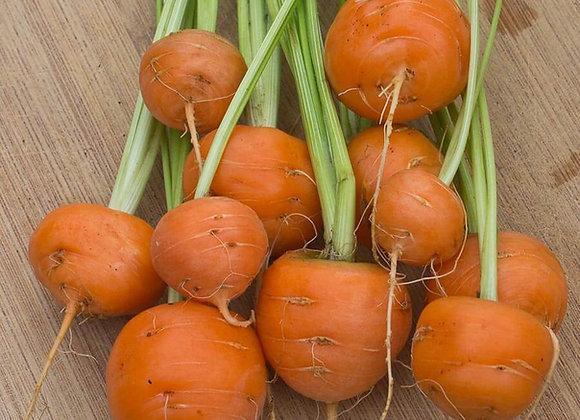 Carota Mercato di Parigi (Daucus carota)
