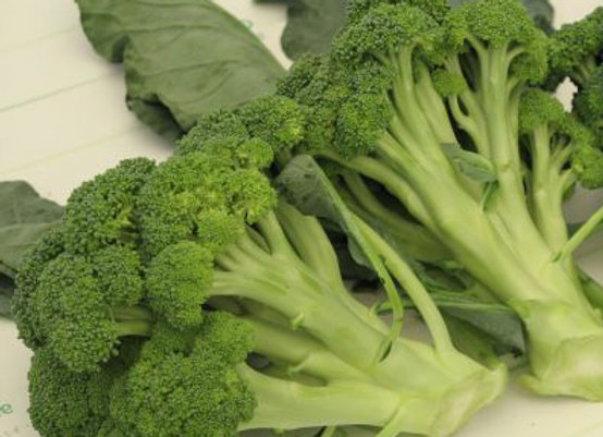 Cavolo Broccolo Calabrese (Brassica oleracea var. botrytis cymosa
