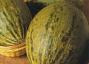 Melone Piel de Sapo (Cucumis melo)