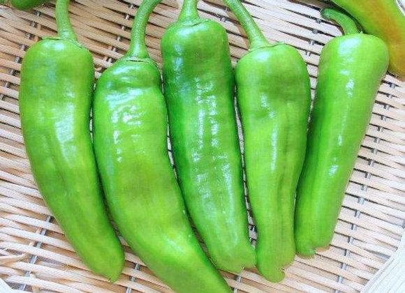 Peperone Friggitello (Capsicum annuum)